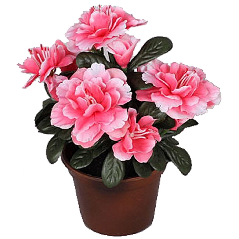Декоративные цветы в горшках фото и названия